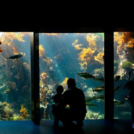 Aquarium à laminaires (© photo : Océanopolis)
