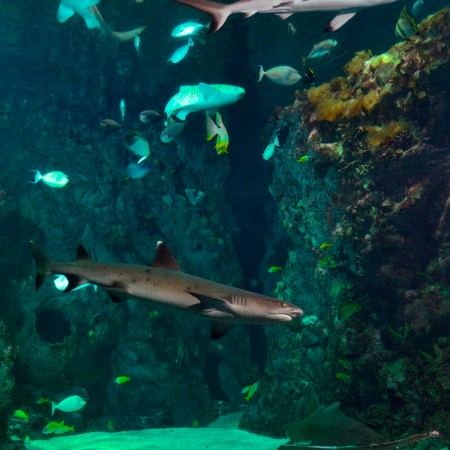 L'aquarium des requins (© photo : Océanopolis)