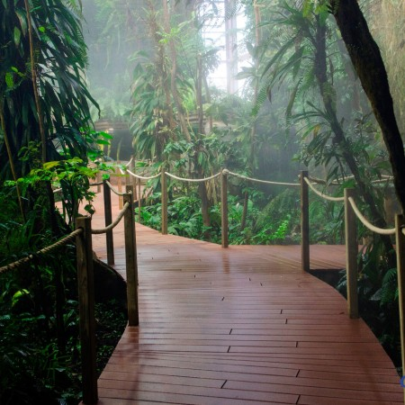 La serre tropicale (© photo : Océanopolis)