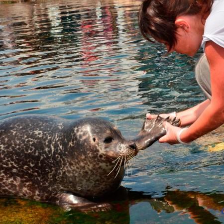 Soins phoques veaux marins (© photo : Océanopolis)